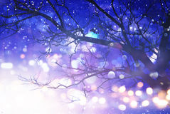 Abstract and magical image of tree with glitter lights. Filtered and toned royalty free stock photos
