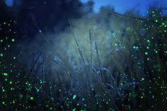 Abstract and magical photo of tall grass with Firefly flying in the night forest. Fairy tale concept vector illustration