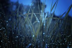 Abstract and magical photo of tall grass with Firefly flying in the night forest. Fairy tale concept stock illustration