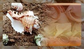 Abstract malplaatje overzeese shell als achtergrond voor website, abstract het malplaatjeontwerp van de informatiegrafiek stock afbeelding