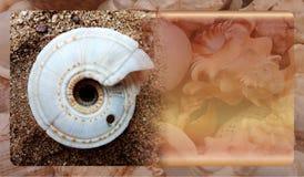 Abstract malplaatje overzeese shell als achtergrond voor website, abstract het malplaatjeontwerp van de informatiegrafiek royalty-vrije stock afbeelding