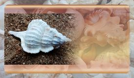 Abstract malplaatje overzeese shell als achtergrond voor website, abstract het malplaatjeontwerp van de informatiegrafiek stock fotografie