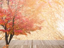 Abstract maple tree in Autumn Stock Photography