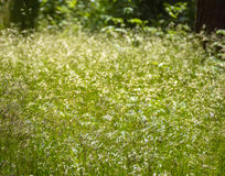 Abstract meadow background Royalty Free Stock Image