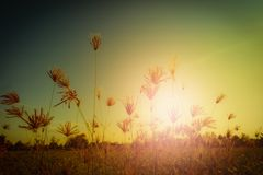 Abstract meadow background with grass in the meadow and sunset,. Vintage Warm tones. Selective focus Stock Photos