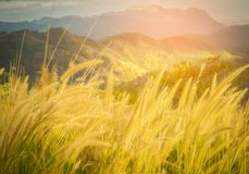 Abstract meadow background with grass in the meadow and sunset,. Vintage Warm tones. Selective focus Royalty Free Stock Photos