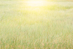Abstract meadow background. Abstract meadow background with grass in the meadow and sunset. Vintage Warm tones Royalty Free Stock Images