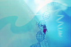 Abstract medical background with DNA helix, genetic code and mos. Quito sucking human blood. Concept for mosquito genetic and gene editing technology (CRISPR Stock Image