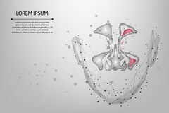 Free Abstract Mesh Line And Point Sinusitis. Low Poly Healthy And Inflammation Nasal Sinus Stock Photos - 179996153