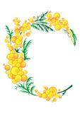 Abstract mimosa branch Stock Photos