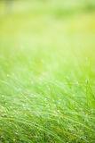 Abstract moisture grass background Stock Photo