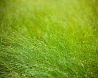 Abstract moisture grass background Stock Image
