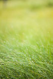 Abstract moisture grass background Royalty Free Stock Photo