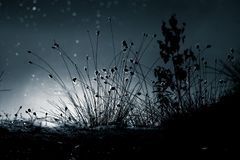 An abstract, monochrome cottongrass reflection in a surface of swamp pond in blue tones. Natural flora of wetlands. An abstrace, monochrome cottongrass Stock Photos