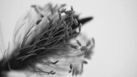 Monochromatic flower Royalty Free Stock Images