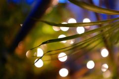 Abstract mood. Greenery greens bokeh lights evening Royalty Free Stock Images