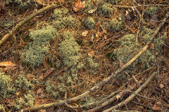 Abstract moss background Stock Image