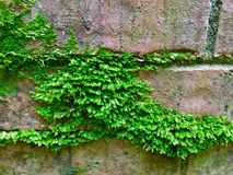 Abstract of moss on brick Royalty Free Stock Photos