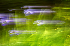 Abstract Motion Blur Effect Flowers. Abstract motion blur of flowers producing a surreal effect stock image