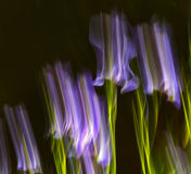 Abstract Motion Blur Flowers Stock Photo