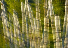 Abstract Motion Blur Surreal Trees Stock Images