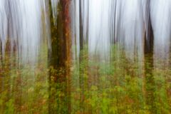 Abstract motion blur of trees. Abstract motion blur of autumn forest trees in fog stock image