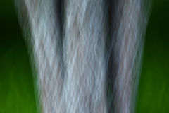 Abstract Motion Blur Trees Artistic Stock Photography