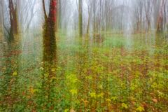 Abstract motion blur of trees. Abstract motion blur of autumn forest trees in fog royalty free stock photography