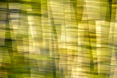 Abstract Motion Blur Trees Effect Stock Images