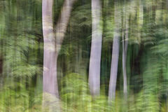Abstract motion blur, trees trunk & leave, yellow green backgrou. Nd Royalty Free Stock Photography