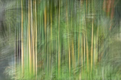 Abstract motion blur, trees trunk & leave, yellow green backgrou. Nd Stock Image