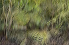 Abstract motion blur, trees trunk & leave, yellow green backgrou. Nd Stock Photo