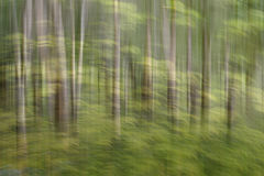 Abstract motion blur, trees trunk & leaves, yellow green backgro. Und Royalty Free Stock Photography