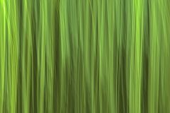 Abstract motion blurred green background. Abstract motion blurred light green reed background texture stock photos