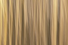 Abstract motion blurred reed background. Abstract motion blurred light yellow reed background texture stock photo