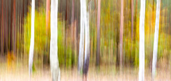 Abstract motion blurred trees in a forest.  Stock Image