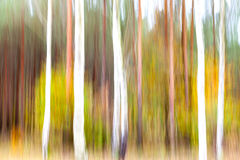 Abstract motion blurred trees in a forest Stock Photo