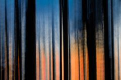 Abstract motion blurred trees at sunset. Abstract motion blurred trees against a brilliant post-sunset sky of deep blue and orange near Tofino, BC, Canada royalty free stock image