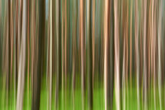 Abstract motion forest background. Green and brown texture. Artistic effect. Abstract nature stock image