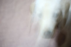 Abstract Motion photo Running puppy dog for background Royalty Free Stock Photos