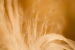 Abstract movement of grass in a field Stock Image