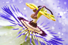 Abstract multi-colored flower,  blur. The abstract multi-colored flower,  blur background Royalty Free Stock Image