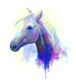 Abstract multi-coloured head horse . Stock Image