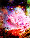 Abstract multicolor flower motive collage in space. Carnation flower. Stock Images