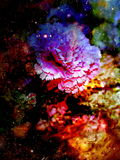 Abstract multicolor flower motive collage in space. Carnation flower. Royalty Free Stock Images
