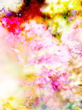 Abstract multicolor flower motive collage in space. Carnation flower. Royalty Free Stock Photo