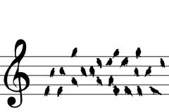 Abstract music stave with birds. Silhouette vector illustration