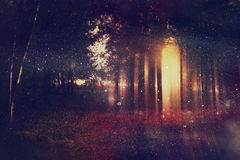 Abstract and mysterious background of blurred forest Royalty Free Stock Images