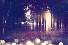 Abstract and mysterious background of blurred forest Royalty Free Stock Image