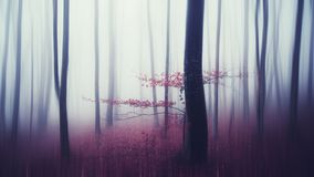 Abstract mysterious forest background with fog Stock Image